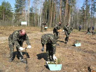 Понад 6 тисяч гектарів лісу цього року планують висадити лісівники Рівненщи ...