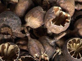 На Рівненщині група селян продавала наркозалежним макову соломку