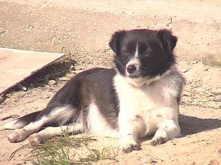 Рівне заборгувало ветеринарам за стерилізацію безпритульних собак