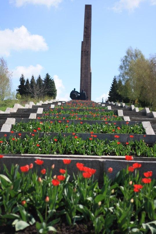 Весна та тюльпани на рівненському Пагорбі Слави [ФОТО]