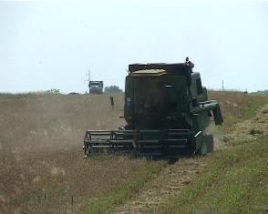 Попри спеку, яка стоїть на Рівненщині, хлібороби працюють у полі