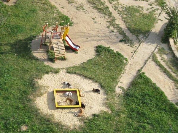 Мікрорайон Північний в Рівному окупували стада бродячих псів
