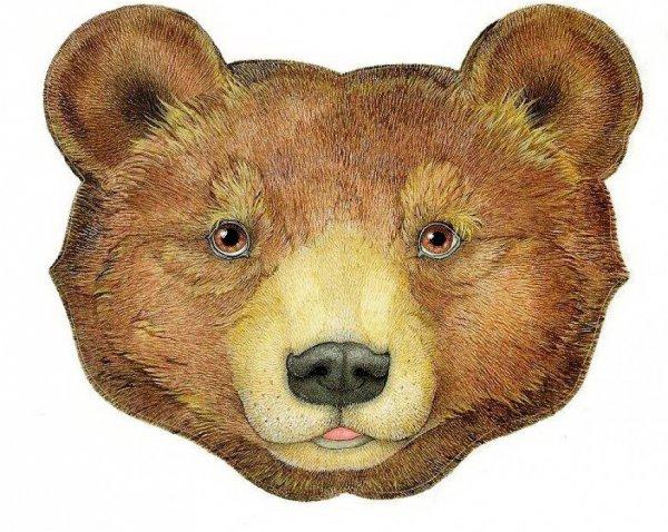 Морда медведя в рисунках