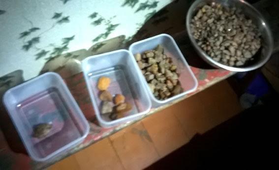 На Рівненщині у скупників вилучили майже вісім кілограмів бурштину (фото) - фото 1