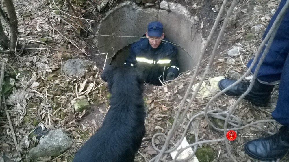 """Результат пошуку зображень за запитом """"рятувальники витягнули собаку із колодязя"""""""