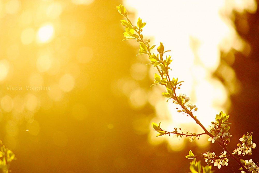 Погода в золотоноше на 14 дней на месяц на