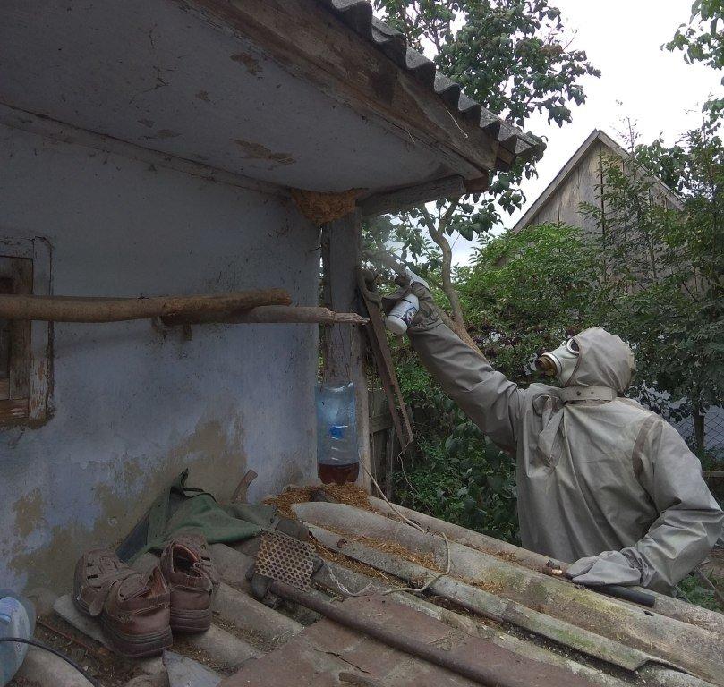 Агресивні комахи продовжують надокучати мешканцям Прикарпаття