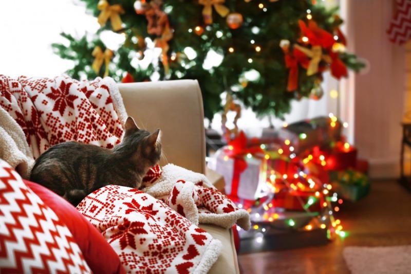 Скільки будуть відпочивати рівняни на новорічні та різдвяні свята. Рівне.  Новини - Новини Рівного. Відео on-line. Все про телекомпанію - Телеканал  «Рівне 1»